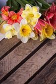 新鲜春天的花朵 — 图库照片