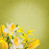 Flowers background — Stok fotoğraf