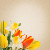 Flowers background — Foto Stock