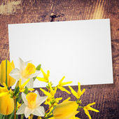 Flowers background — Photo