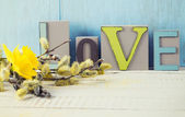 Willow and love — Stock Photo