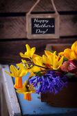 čerstvý jarní květiny — Stock fotografie