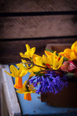 Fresh spring flowers — Stock Photo