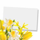 λουλούδια φόντο — Φωτογραφία Αρχείου