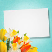 Flowers background — Stock fotografie