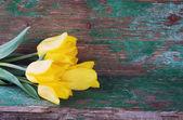 Fresh yellow flowers — Stock Photo