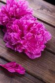 Peony flowers — Stock Photo