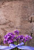 Hesperis flowers — Stock Photo