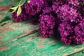 Fresh lilac flowers — Stock Photo