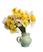Fresh daffodils — Stock Photo