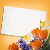 Floral background — Foto Stock