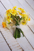 Fresh daffodils — Stockfoto