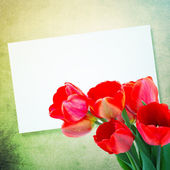 Postcard with tulips — Stok fotoğraf