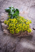 Rapeseed plant — Stock Photo