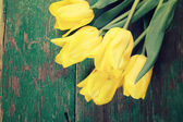 Fresh yellow tulips — Stock Photo