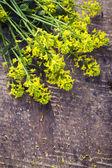 Wild flowers — Zdjęcie stockowe
