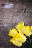 Fresh tulips — Stockfoto