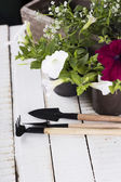 Flowers and garden tools — Stock Photo