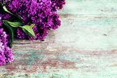 Fresh lilac — Stock Photo