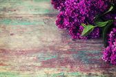 Fresh lilac — Stock Photo