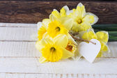 Fresh daffodils — Zdjęcie stockowe