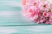 Taze gül — Stok fotoğraf