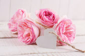 Eleganti fiori — Foto Stock