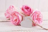 Zarif çiçekler — Stok fotoğraf
