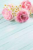 свежие розы — Стоковое фото