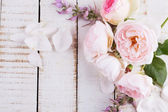 свежие цветы — Стоковое фото