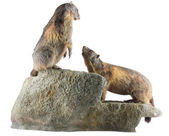 Two Marmots — Stock Photo