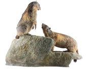 Two Marmots — Stock Photo