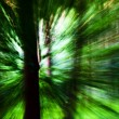 Moving Trees — Stockfoto