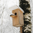 Bird house — Stock Photo