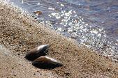 Powłoki w piasku — Zdjęcie stockowe