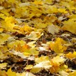 Autumn leaves — Stock Photo #33229719