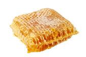Honey comb — Stock Photo