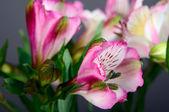玫瑰鲜花 — 图库照片
