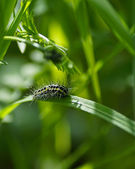 Caterpillar. — Stock Photo