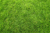 Green field of grass background — Stock Photo
