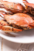 Cooked rock crab — Stock Photo