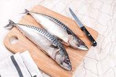 Cutting and preparing fresh mackerel fish — Stock Photo