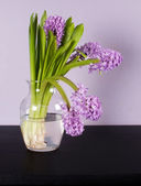 Lilac hyacinth in glass vase on black table — Stock Photo