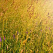 Meadow with green and yellow grass and flowers — Stock Photo