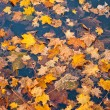 Autumn yellow foliage — Stock Photo