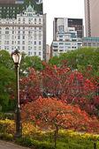 Central park met straat lamp en heldere bomen — Stockfoto