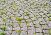 Stone paved road with grass — Stock Photo