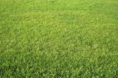 Grass — Stockfoto