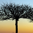 Tree silhouette — Stock Photo #18950609