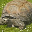 Giant turtle — Stock Photo #28490527